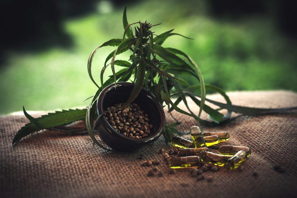 CBD Öl Erfahrungen - Cannabis Blüte